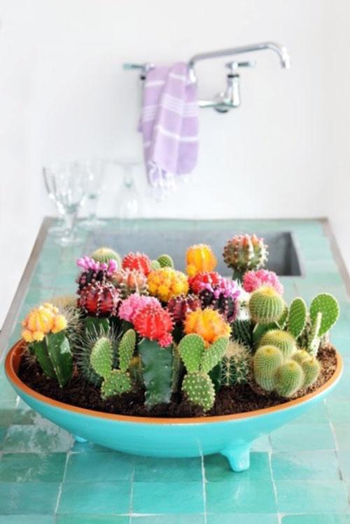 Succulent010