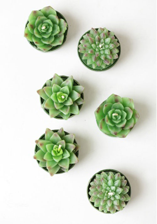 Succulent012