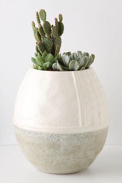 Succulent013