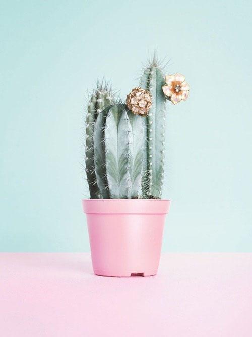 Succulent014