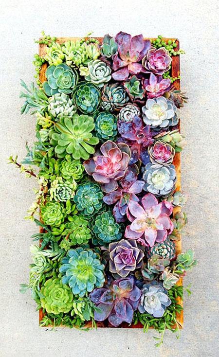 Succulent04