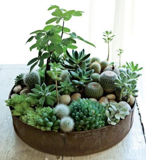 Succulent06
